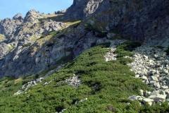 Staroleśny Szczyt (słow. Bradavica) - relacja z wejścia całkiem turystycznego